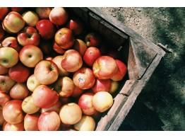 Umpluturi de fructe D'ARBO